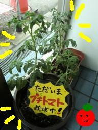http://osaka-nihonbashi.anihiro.jp/images/201010160101.jpg